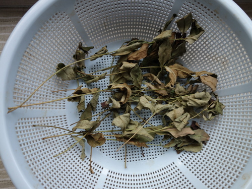Dried leaves for guava tea