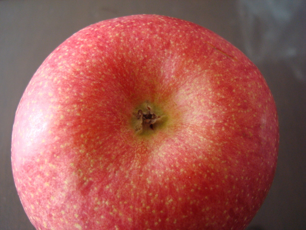 Color of calyx of Sun Fuji Apple