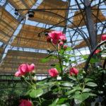 はな阿蘇美のバラドームはバラの香りも満喫できて最高!