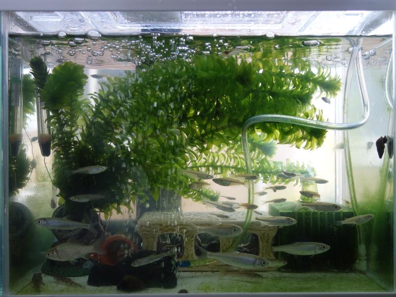 ミナミヌマエビを飼っている水槽