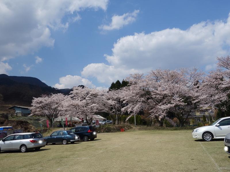観音桜の駐車場から見た観音桜の入り口方面