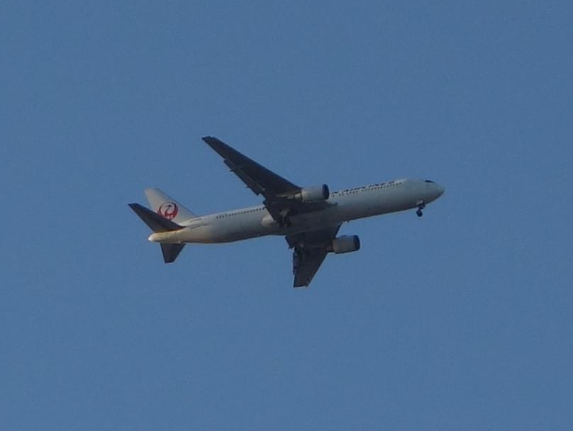 飛行機とメタセコイア