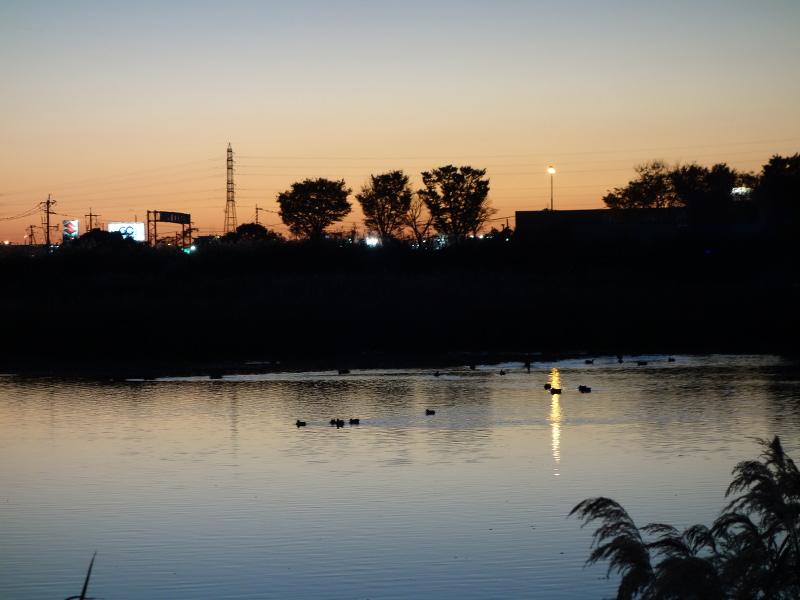 夕焼け空とカルガモ