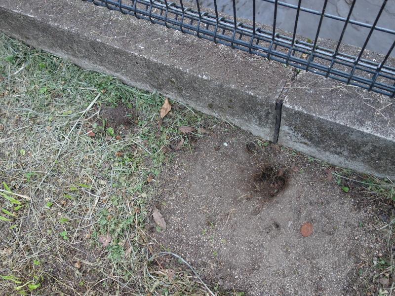 シマヘビが掘った穴